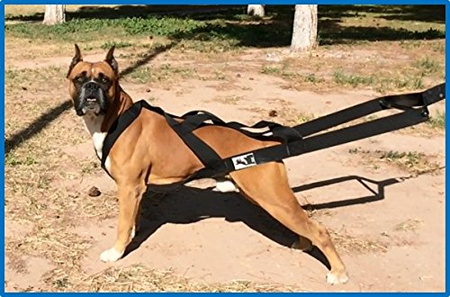 Destructive Chewing Dog? | Weight Pulling Dog Harness